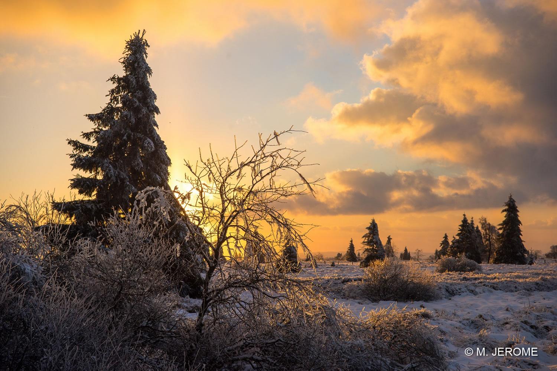 Fagne - Crépuscule d'hiver