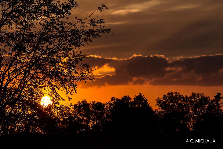 Coucher de soleil arbres
